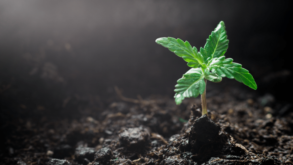 How To Grow Your Cannabis Business With Digital Marketing